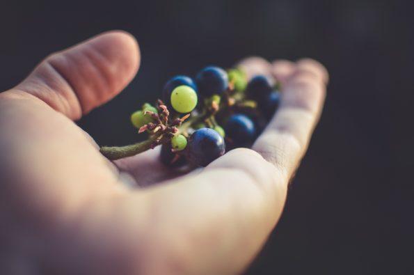 Qualitätvoller Wein braucht Zeit und Wissen für die optimale Entwicklung